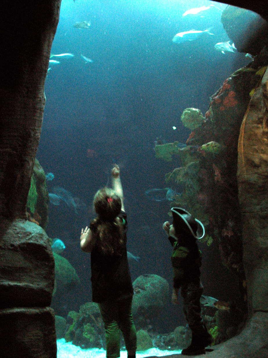 Tn Aquarium Celebrates Dr Seuss With Discount