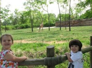 Nashville-Zoo-giraffe-habitat