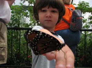 Britton-butterfly
