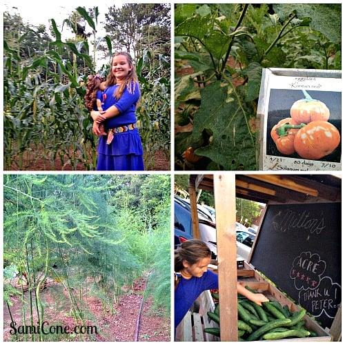 miltons cuisine alpharetta garden collage