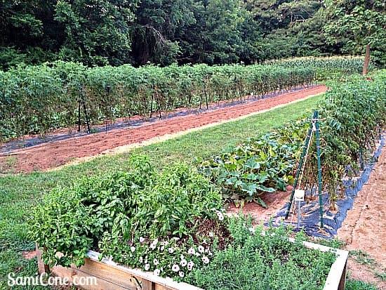 miltons cuisine alpharetta outdoor garden