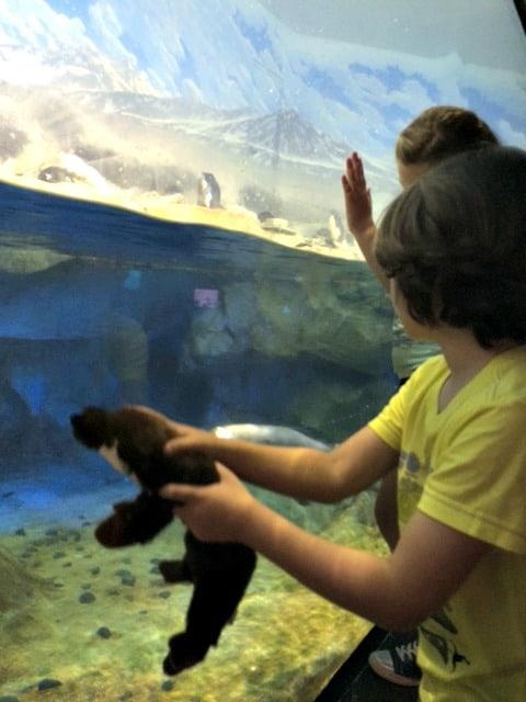 Aquarium-Otter-Britton