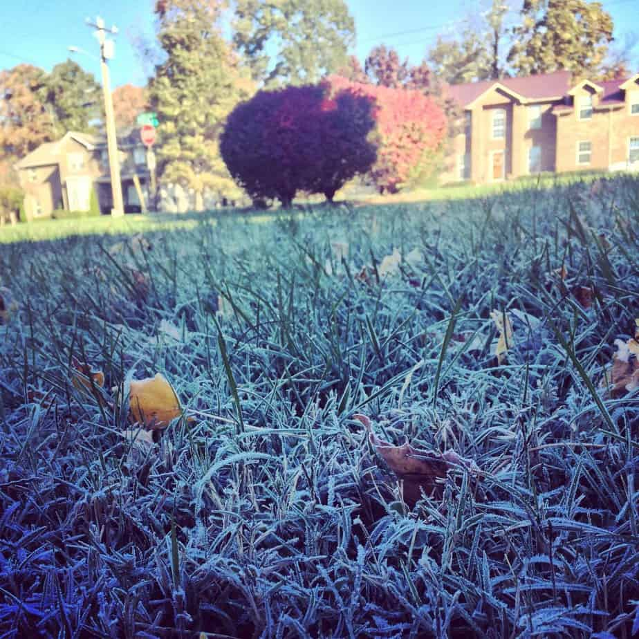frost on grass fall