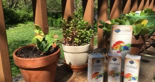 mykind-organics-vitamin-sprays-horiz