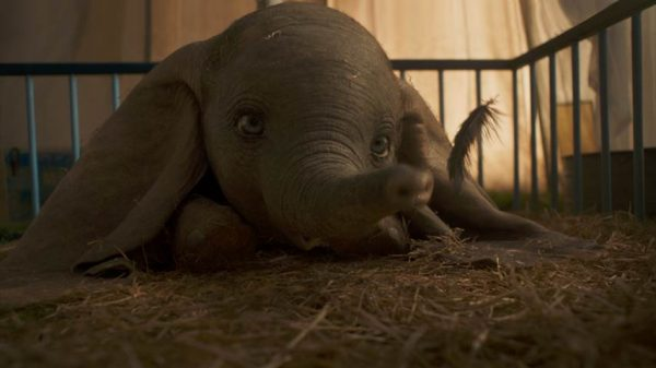 baby dumbo 2019 with feather