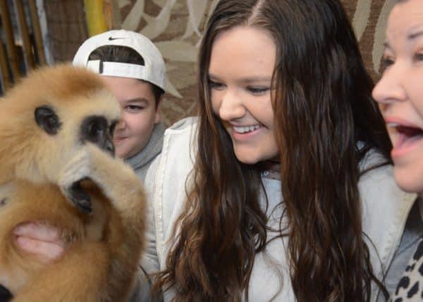 Preservation Station Gibbon Kariss Smile